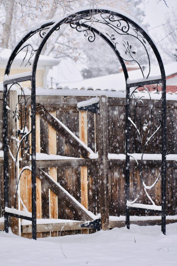 Snow falling on trellis, looks great in a winter-scape!